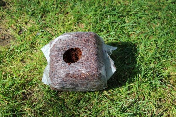 Anzuchtwürfel Kokos ,Keimwürfel