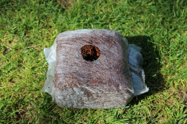 Kokos Anzuchtblock 10x10x7 cm (900ml)